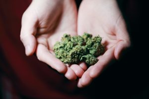 close up cannabis in hands